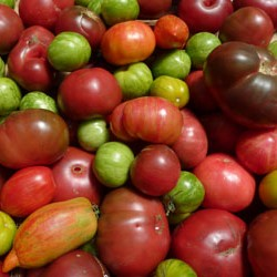 CUESA Heirloom Tomatoes
