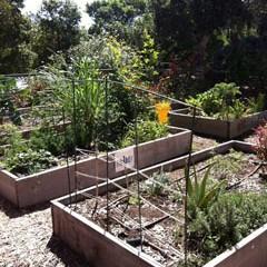 Miramar College Garden 2