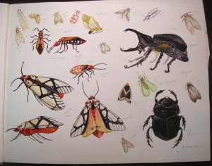 A page of my drawings of bugs that I found around my home in North Sumatra, some of which prompted my carving teacher to share cultural information unobtainable otherwise.